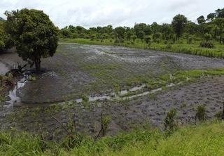 Foto da Direcção Nacional de Agricultura e Silvicultura